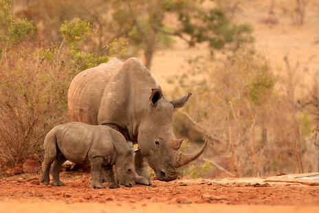 Born Free Foundation - One year rhino adoption pack - Save 0%