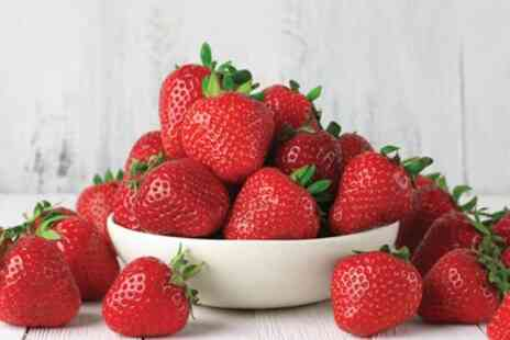 Groupon Goods Global GmbH - 6, 12 or 24 Cambridge Favourite Strawberry Plants with Incredicrop Fertiliser - Save 0%