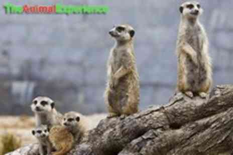 The Animal Experience - A meerkat & birds of prey experience - Save 53%