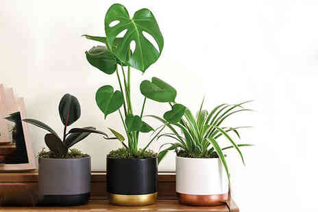 Thompson & Morgan - House plant urban jungle collection - Save 0%