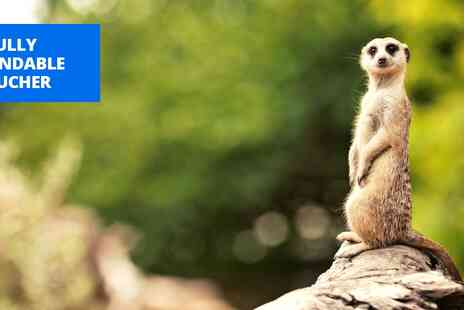 The Animal Experience - Meet the meerkats experience for 2 in Cambs - Save 51%