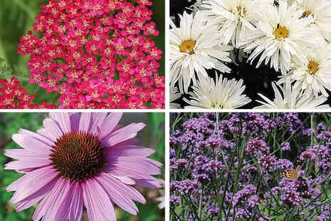 Thompson & Morgan - 72 pack of perennial plants - Save 46%