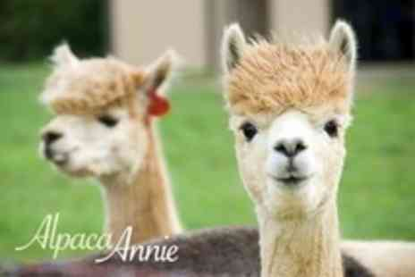 Alpaca Annie - Two Hour Alpaca Trek For Two With Hot Soup and Baguette - Save 41%