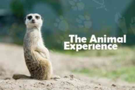 The Animal Experience - Meerkat Experience Plus Reptiles and Birds of Prey Show - Save 50%