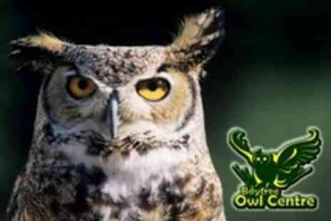Baytree Owl Centre - Two Hour Owl Handling Experience - Save 28%