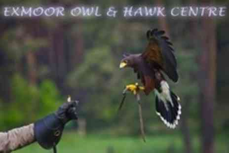 Exmoor Owl and Hawk Centre - Birds of Prey Experience and Guided Tour For One - Save 66%