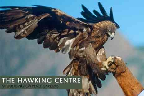 The Hawking Centre - Childs Falconry Fun Day - Save 68%