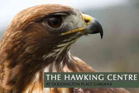 The Hawking Centre - Two Hour Falconry Course - Save 62%