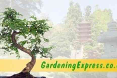 GardeningExpress.co.uk - Indoor Bonsai Tree - Save 50%