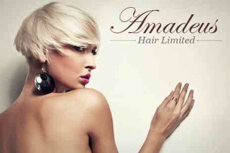 Amadeus Hair - Half Head of Highlights or Full Colour With Wash, Cut and Blow Dry - Save 65%