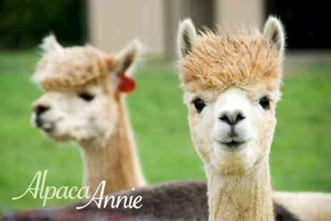 Alpaca Annie - Two Hour Experience For Two With Sandwich and Tortilla Chips - Save 57%