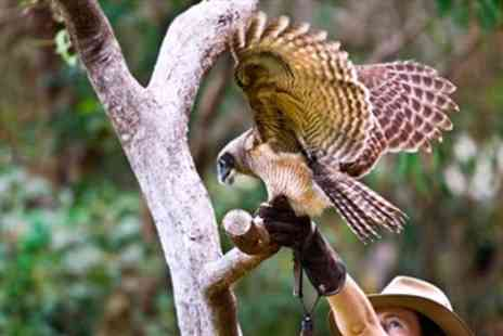 Exmoor Owl & Hawk Centre - All Day Birds of Prey Experience & Cream Tea - Save 34%