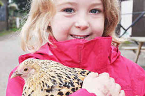 Highfields Happy Hens - Full Day Farm Experience for Family of Four - Save 56%