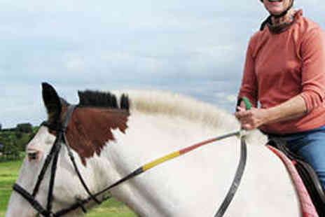 Laurelview Equestrian Centre - 45 Minute Private Horse Riding Lesson - Save 50%