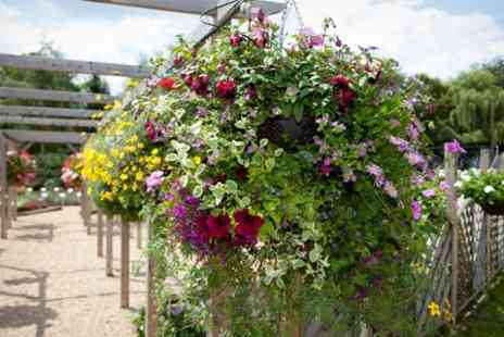 Garden Plants Direct - Two Pre Planted Hanging Baskets in Bloom - Save 50%
