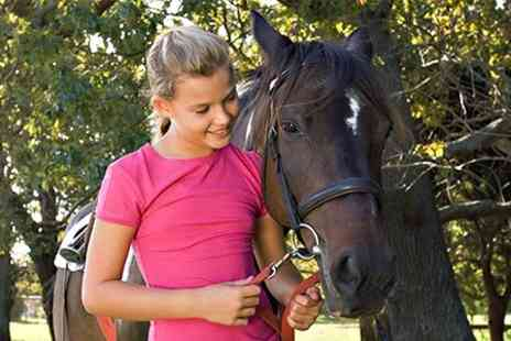 Ellenwhorne Equestrian Centre - Horse and Pony Care Experience With Lunch - Save 60%