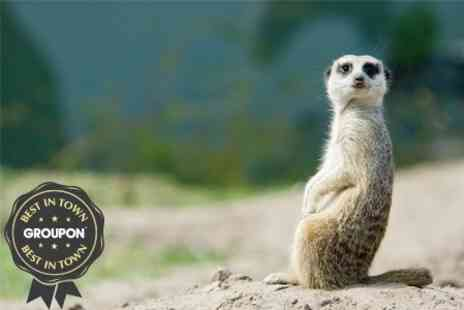 The Animal Experience - Meet the Meerkats For One - Save 50%