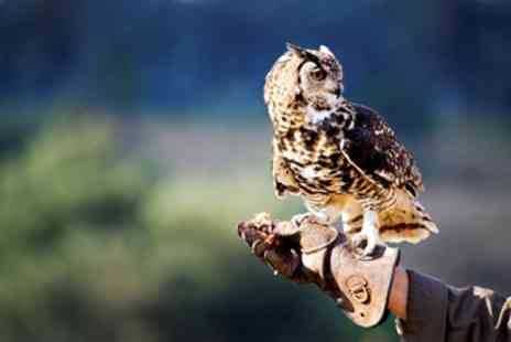 Exmoor Owl & Hawk Centre - Hands on Exmoor Birds of Prey Experience - Save 24%