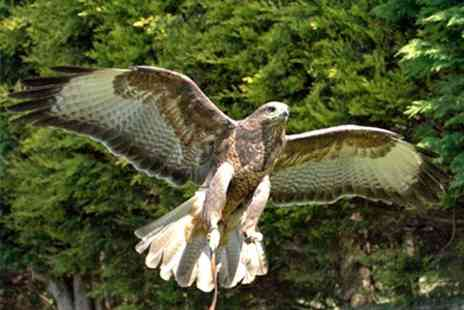 Exmoor Owl & Hawk Centre - Bird of Prey Experience With Lunch and Cream Tea - Save 51%