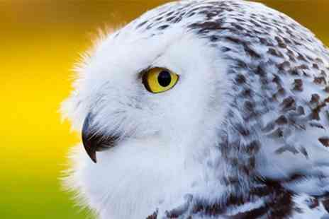Millets Farm Falconry Centre - Falconry Guided Tour Handling and Display For One - Save 54%