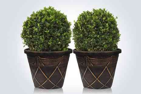 GardenersMarket.co.uk - Two Tuscan topiary balls  - Save 54%