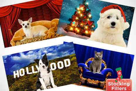 Braid Pets Salon - Make Your Pet Talk and Star in a Personalised Greeting Video - Save 60%