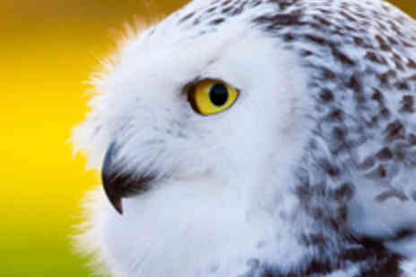 Millets Farm Falconry Centre - One Hour Falconry Experience with a Guided Tour and Handling Display - Save 54%