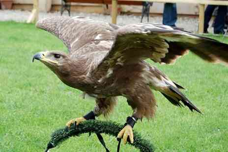 Battlefield Falconry Centre - Birds of Prey Experience - Save 69%