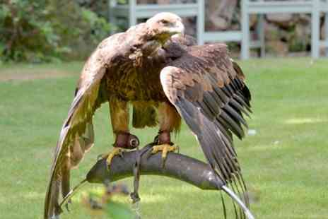 Feather Perfect Falconry CIC - Two Hour Hawk Walk For One - Save 79%
