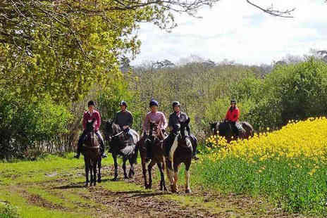 Horse Riding Surrey - Two Hour Horse Riding Hack - Save 50%