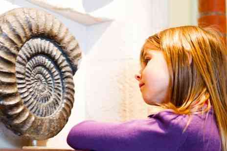 Fossils Galore - Fossils Galore Childs Entry With Activities and Sharks Tooth - Save 50%