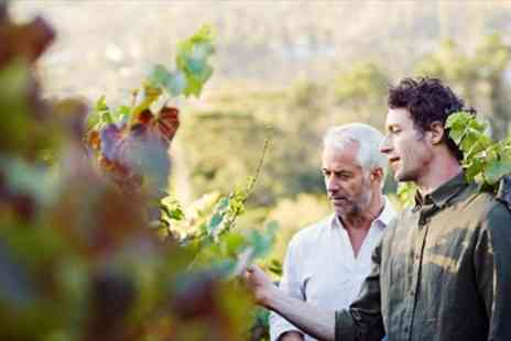 Sedlescombe Organic Vineyard - Award Winning Vineyard Tour & Tasting for Two - Save 41%