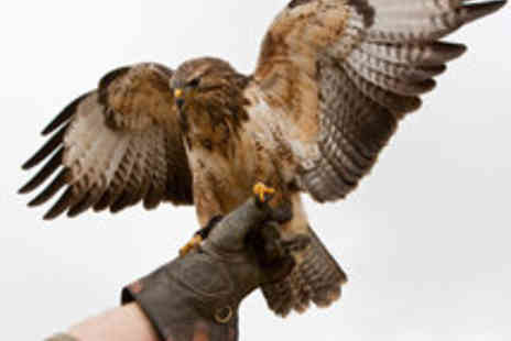 Millets Farm Falconry Centre - Hands On Falconry or Birds of Prey Photo Experiences