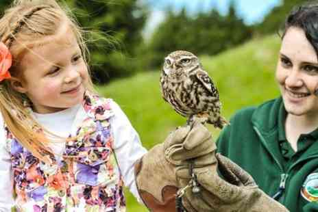 Lightwater Valley Attractions - One Hour Owl Handling Experience - Save 58%