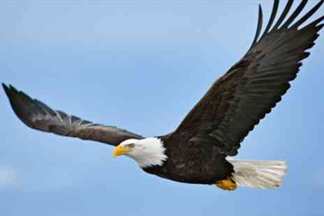 Birds of Prey Centre -  Hands on Birds of Prey Experience with Eagles - Save 77%