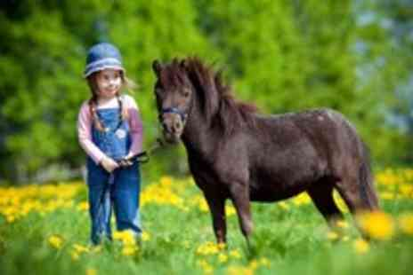 Hooves and Paws - Two hour miniature horse & pony party for up to 6 children - Save 50%