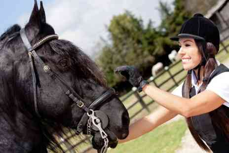 Cavallo Riding School - Horse Riding Lessons For One - Save 40%