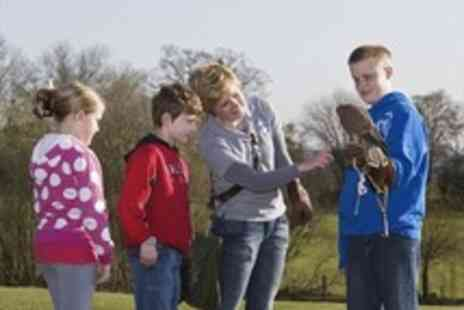 The International Centre for Birds of Prey - One child entry to The International Centre for Birds of Prey - Save 45%