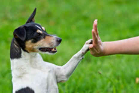 Hypnotherapy Centre of Excellence - Canine Behaviour Training Course - Save 94%