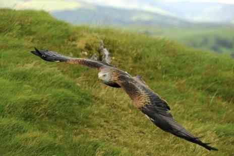 Falconry Experience Wales - Two Hour Bald Eagle Handling or Half Day Falconry Experience - Save 0%