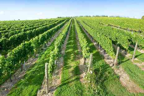 Cottonworth Vineyard - Vineyard Tour for 2 with Tastings & Lunch - Save 47%