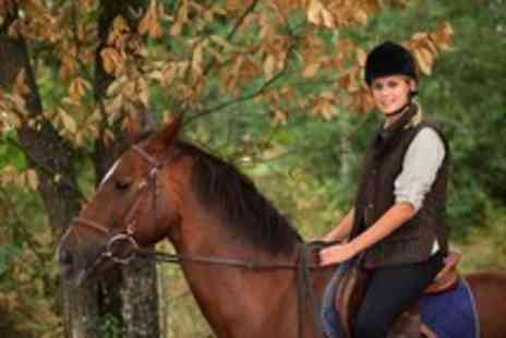 Grange Trekking - Horse riding experience with a One hour introduction lesson & one hour trek for two - Save 59%