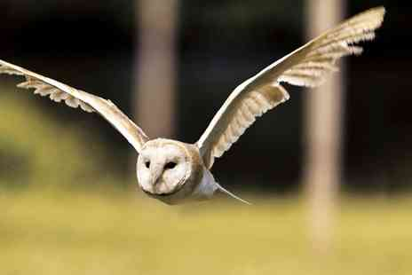 Birds of Prey Centre - Hands On Birds of Prey Experience with Owls - Save 77%