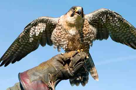 Millets Farm Falconry Centre - Hands On Birds of Prey Experience - Save 54%