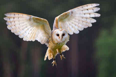 Birds of Prey Centre - Half day owl experience for One  - Save 60%