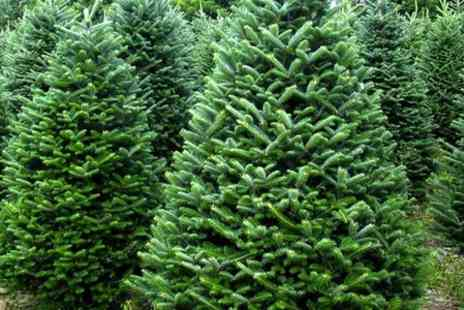 New Farm Christmas Trees - 5 fit Xmas Tree With Stand  - Save 0%
