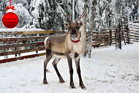 South Lakes Wild Animal Park - Adopt a reindeer and get a one day family pass to the zoo  - Save 71%