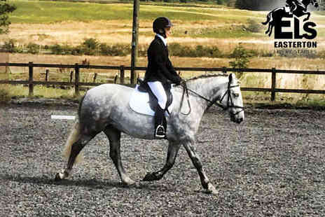 Easterton Stables - Two Horse Riding Lessons - Save 55%