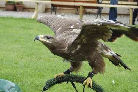 Battlefield Falconry Centre - Birds of Prey Experience - Save 68%