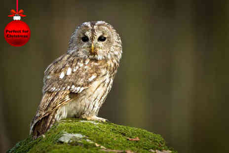 Hawking About -  One hour hawk walk or owl experience for one  - Save 46%
